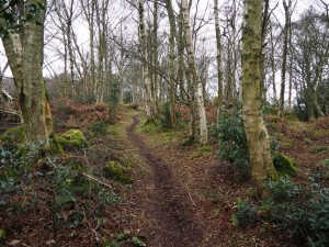 Pike Crag Wood