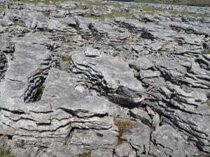 A close up of the limestone pavement