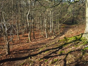 The woodland path above Redmire Force