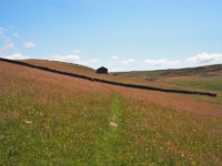 The thin path crossing the meadow towards High Shaws Laithe