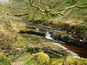 Needlehouse Gill