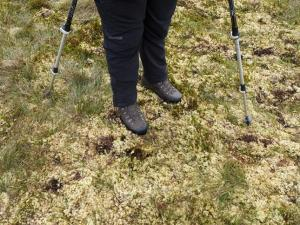 Bone dry moss, normally this would be a very moist bog