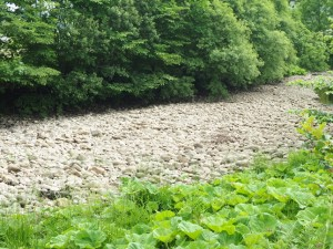 Some section of the River Dee were bone dry