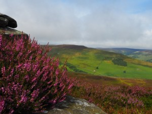 Beautiful purple heather at the beacon
