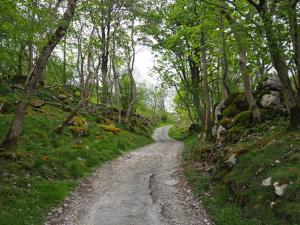The road to Ellerbeck